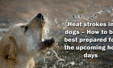 Heat strokes in dogs – How to be best prepared for the upcoming hot days