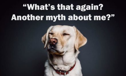 Dogs and the Myths about them