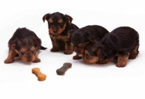 Puppies litter toys