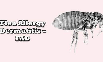 Flea Allergy Dermatitis – FAD