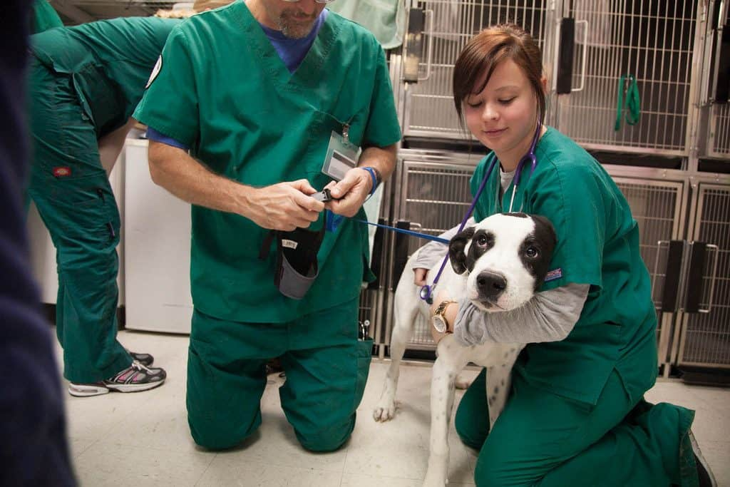 Vet tech, veterinary technician, dog, veterinary medicine, clinic, vet clinic, being a Vet Tech
