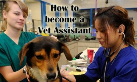 How to become a Veterinary Assistant?
