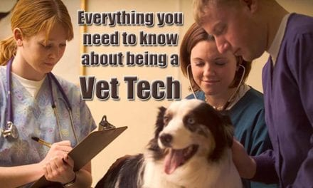 How to become a Vet Tech and everything you need to know about the profession