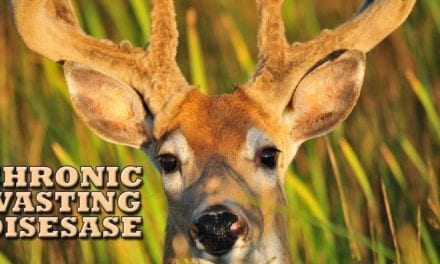 Chronic Wasting Disease