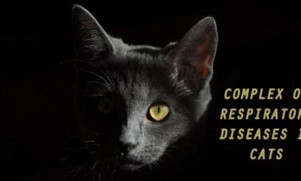 Complex of Respiratory Diseases in Cats