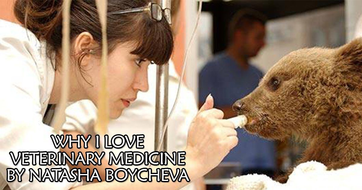 Why I Love Veterinary Medicine- By Natasha Boycheva