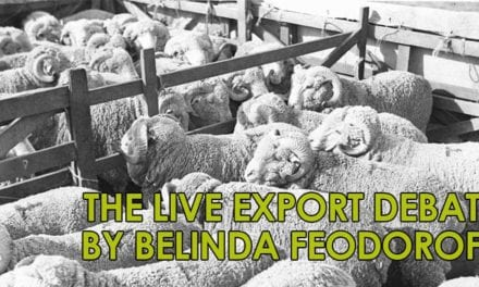 The Live Export Debate by Belinda Feodoroff