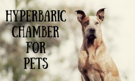 Hyperbaric chamber for pets