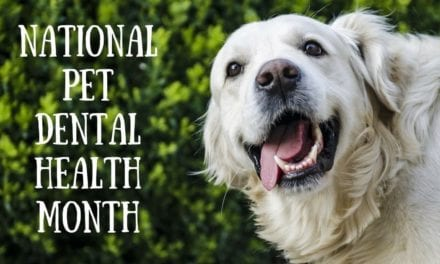 National Pet Dental Health Month – February 2020