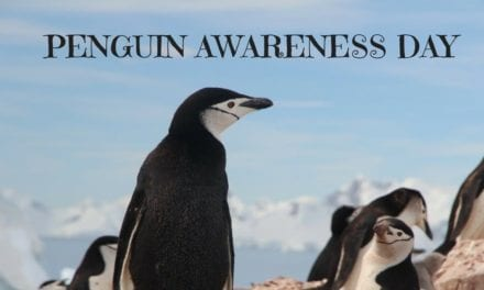 Penguin Awareness Day – January 20th