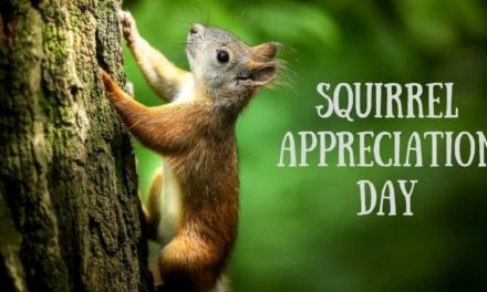 Squirrel Appreciation Day- January 21st