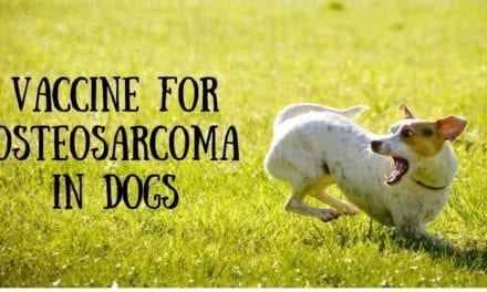 Vaccine for osteosarcoma in dogs