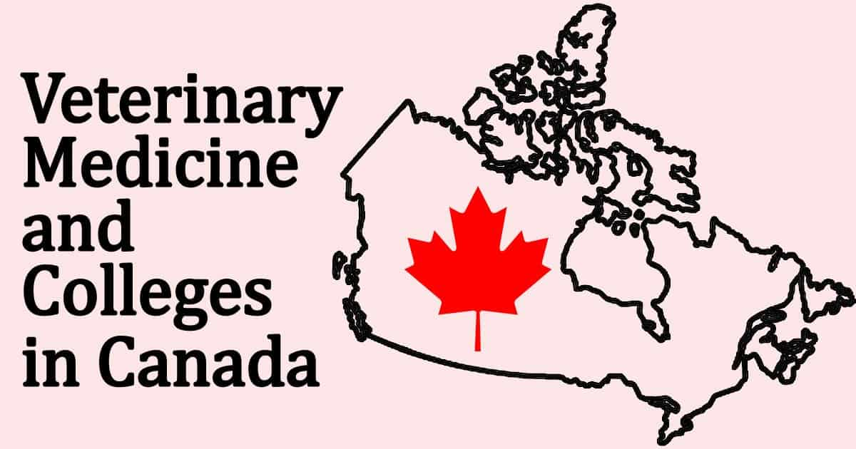 Veterinary Medicine and Colleges in Canada