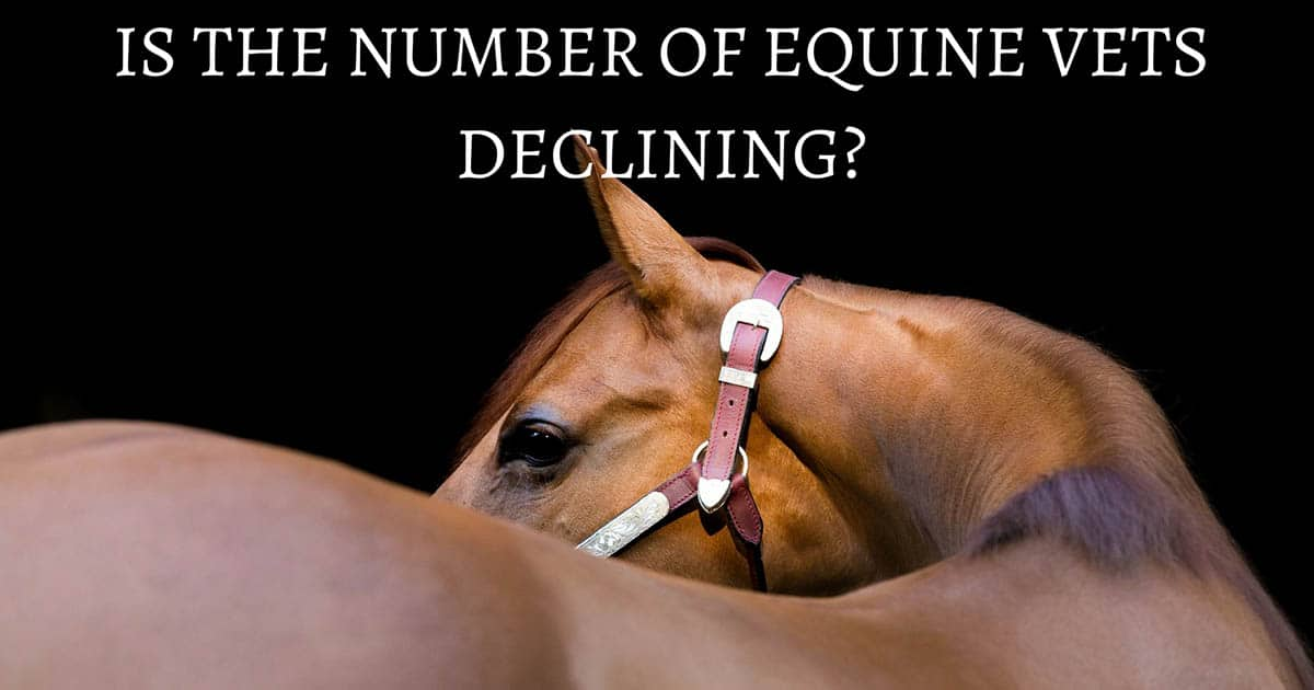 Is the number of equine vets declining?