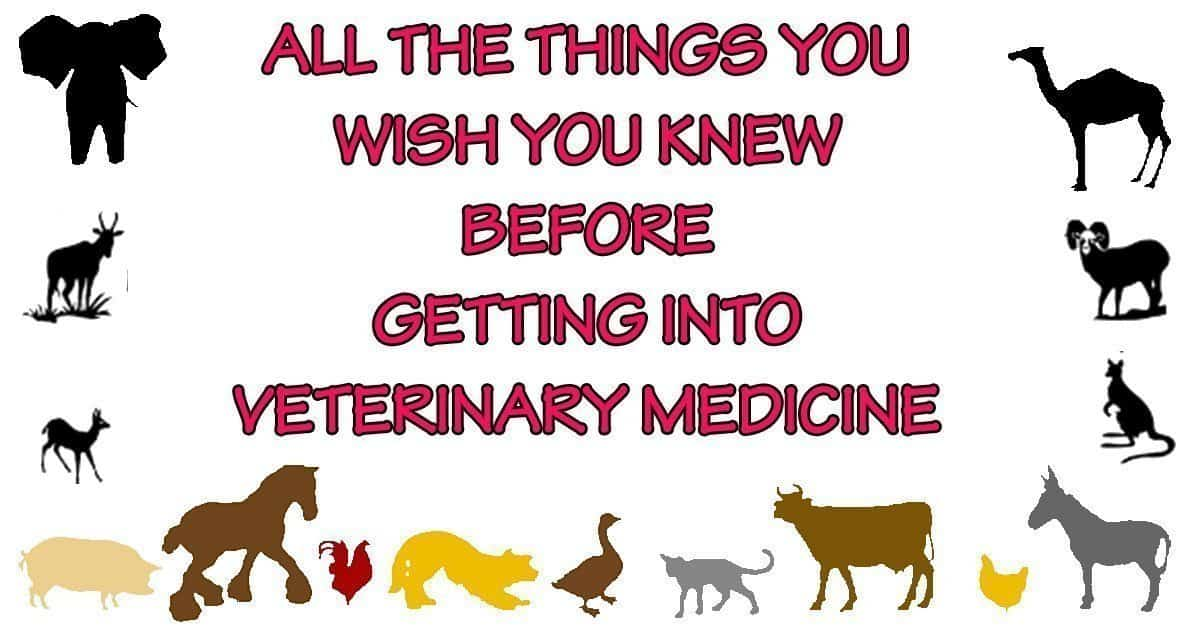 All the things you wish you knew before getting into Veterinary Medicine
