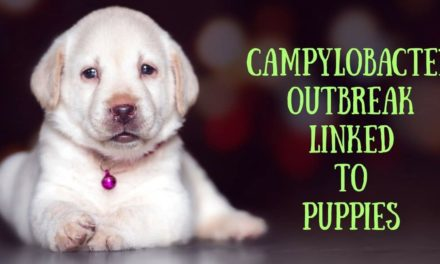 Campylobacter Outbreak Linked to Puppies