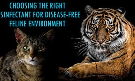 Choosing the Right Disinfectant for Disease-Free Feline Environment