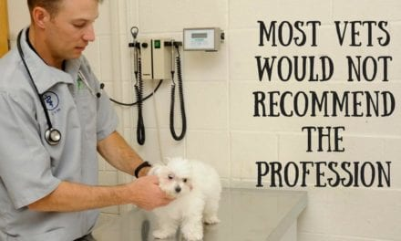 Most vets would not recommend the profession