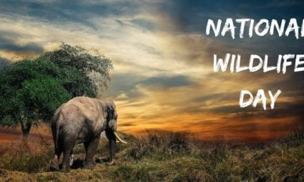 National Wildlife Day