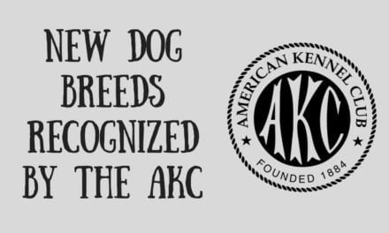 New dog breeds recognized by the AKC