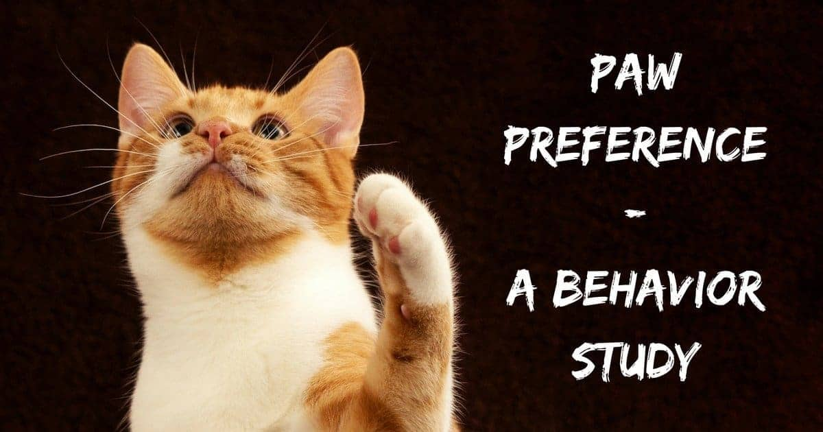Paw preference – a behavior study