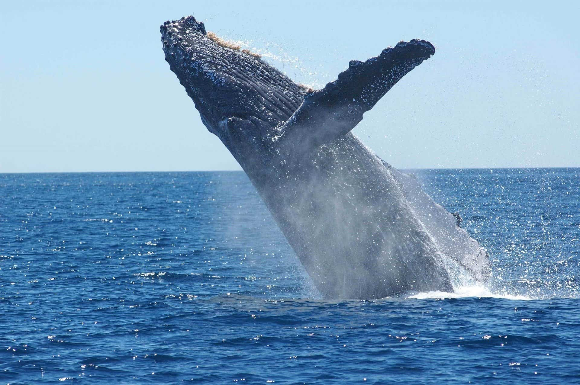 world whale day