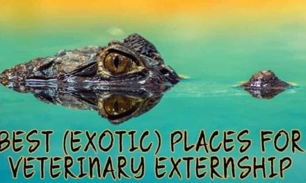Best (Exotic) Places for Veterinary Externship