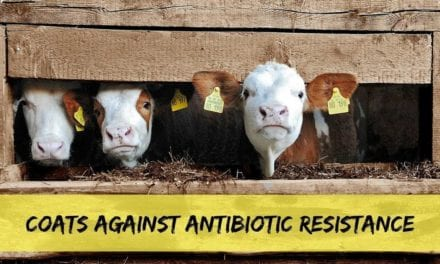 Coats against antibiotic resistance