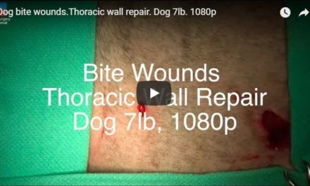 Dog Bite Wounds Thoracic Wall Repair Video by The Vet Surgery Channel