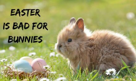 Easter is bad for bunnies