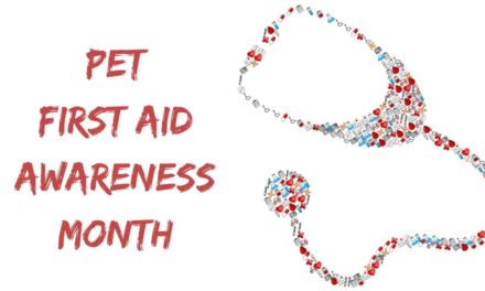 Pet First Aid Awareness Month – April 2020