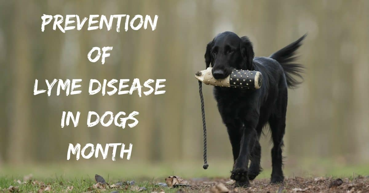 Prevention of Lyme Disease in Dogs Month – April 2020