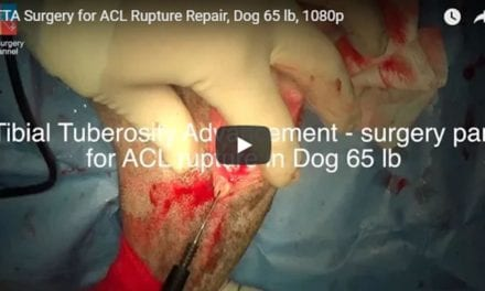 TTA Surgery for ACL Rupture Repair, Dog 65 lb Video by Vet Surgery Channel