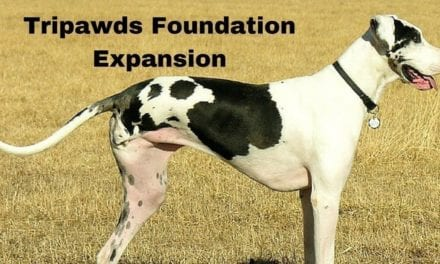 Tripawds Foundation Expansion