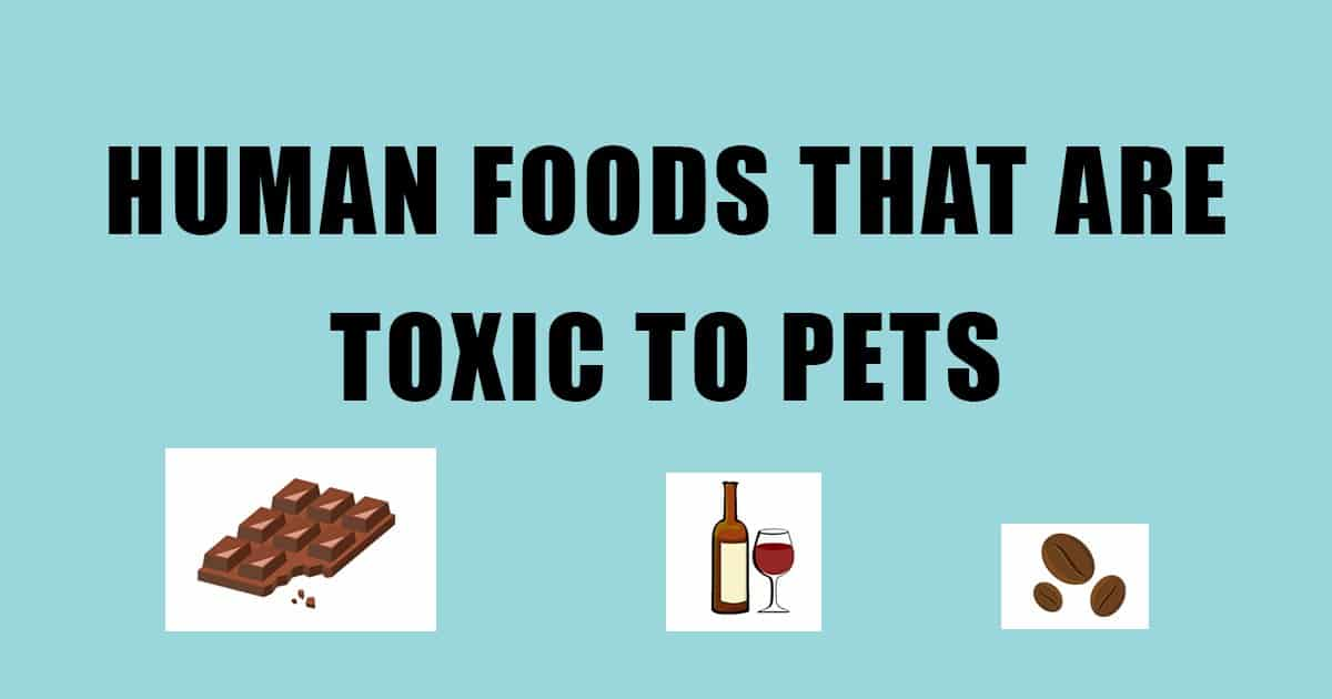 Human Foods that are Toxic to Dogs