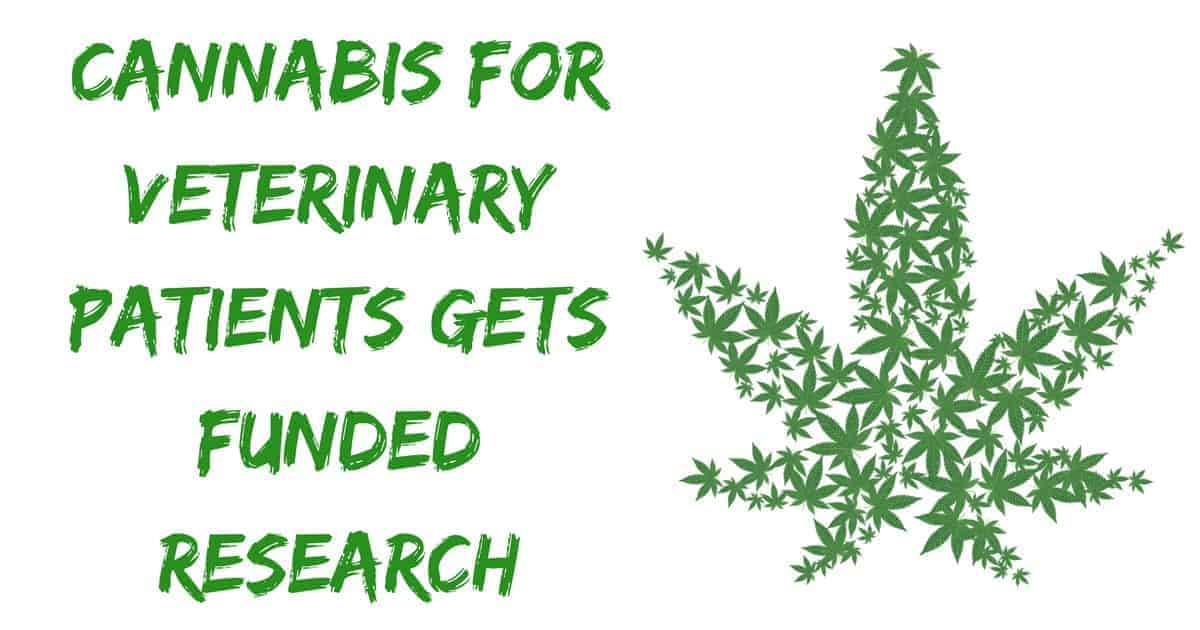 Cannabis for veterinary patients gets funded research
