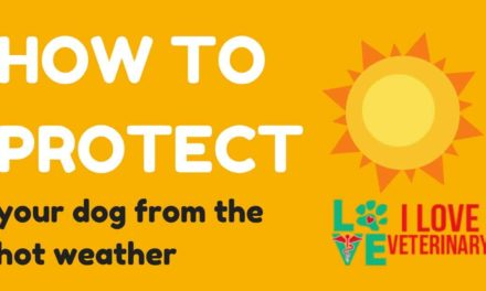 How to protect your dog from the hot weather