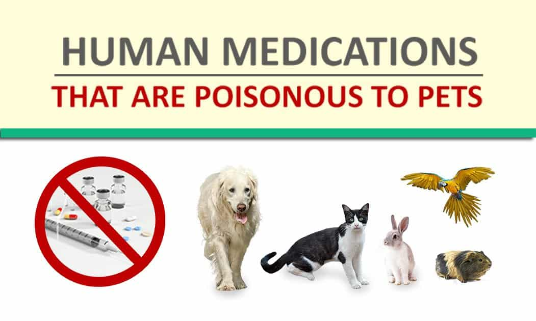 Human Medications That Are Poisonous To Pets