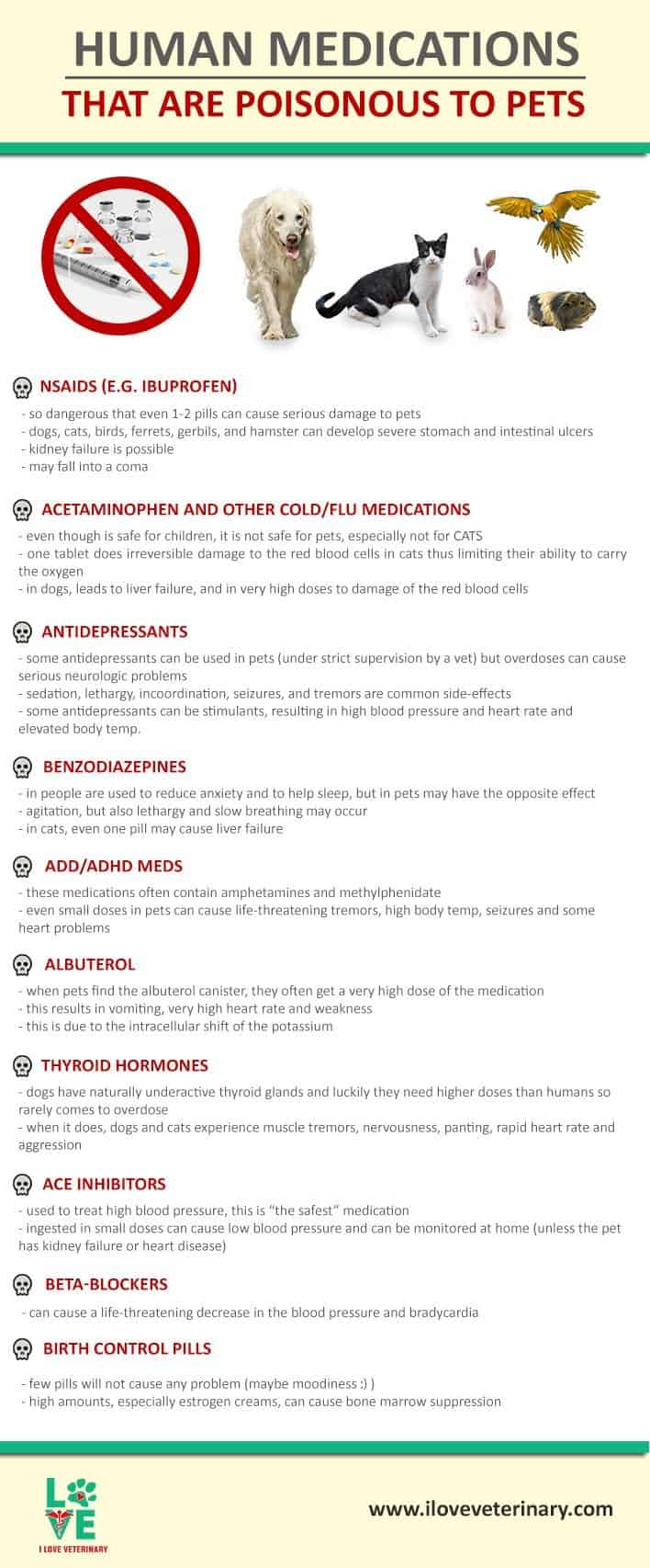 Human Medications that are Poisonous to Pets infographic i love veterinary