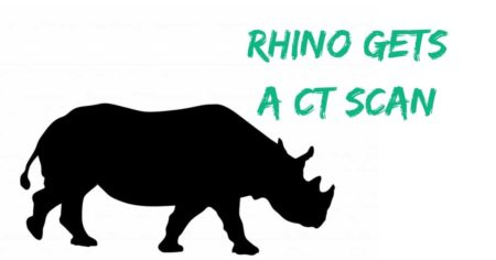 Rhino gets a CT scan