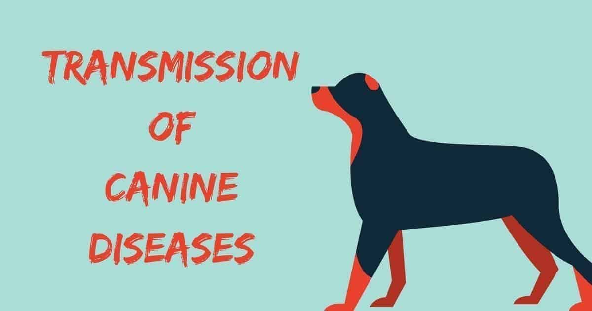 Transmission of Canine Diseases