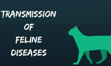 Transmission of Feline Diseases