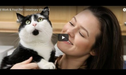 Blood Work & Your Pet Video by Victoria Birch
