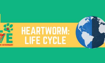 Heartworm: Life Cycle