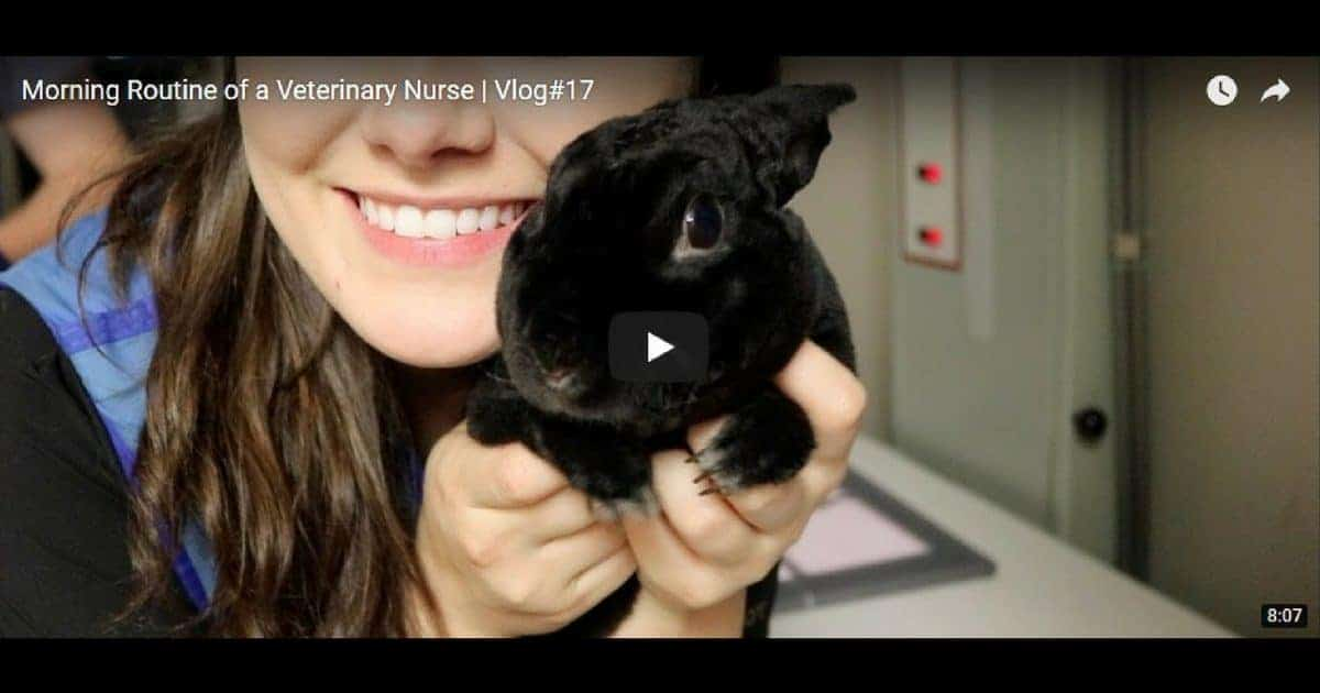 Morning Routine of a Veterinary Nurse, Video by Victoria Birch