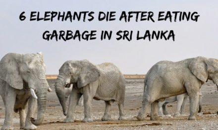 6 Elephants Die After Eating Garbage in Sri Lanka