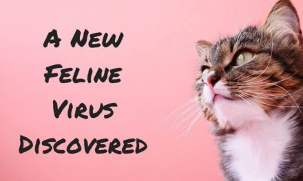 A New Feline Virus Discovered