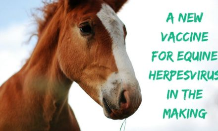 A new vaccine for equine herpesvirus in the making