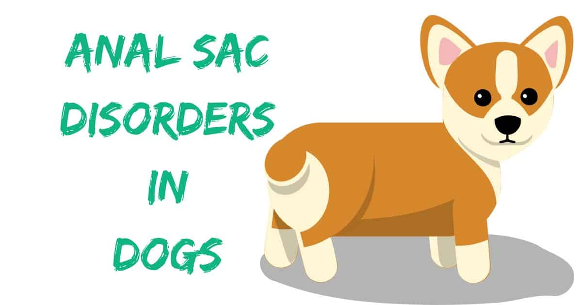 Anal Sac Disorders in Dogs