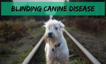 Blinding canine disease
